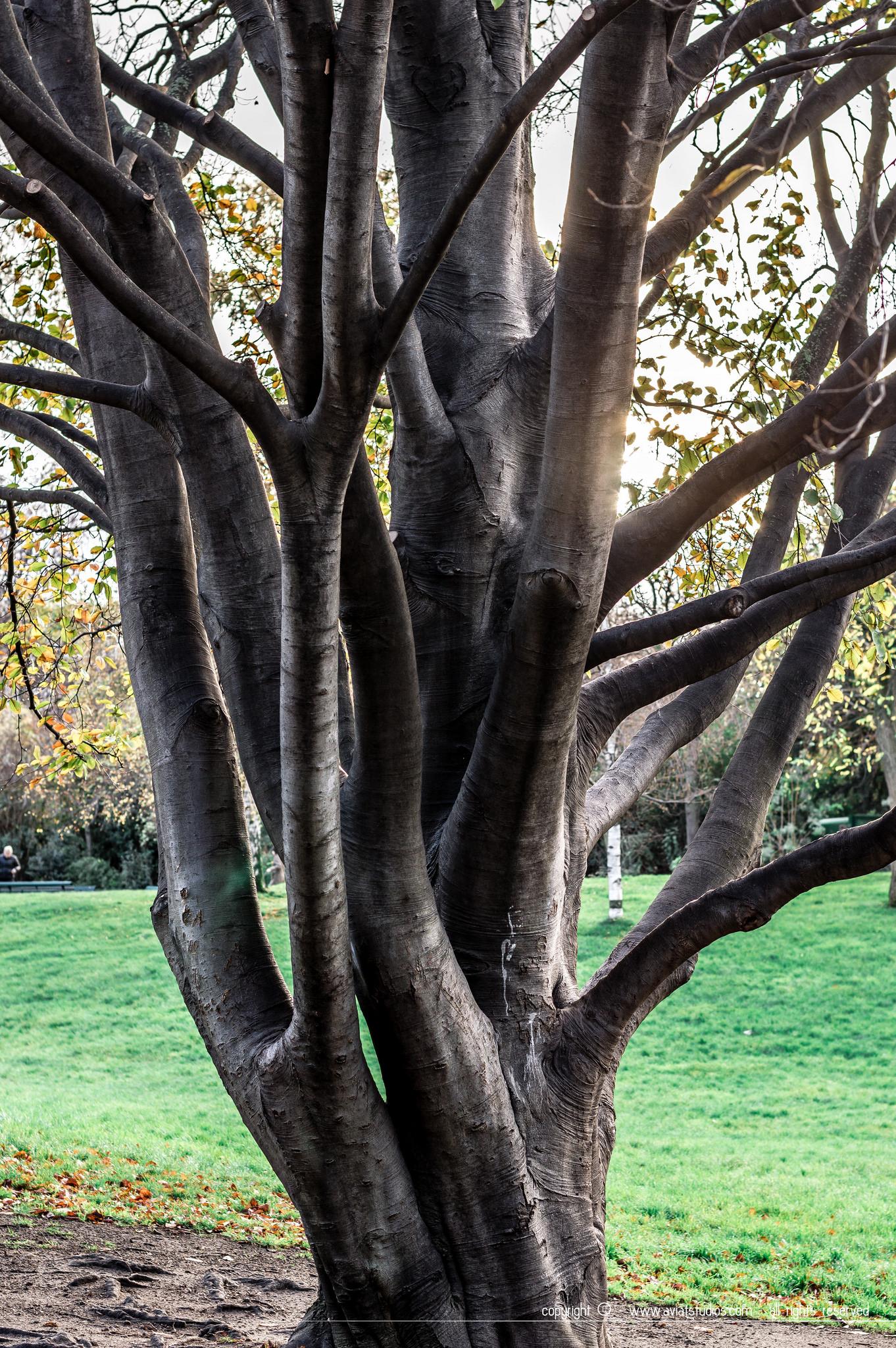 Un week-end à Paris - rencontre avec la nature