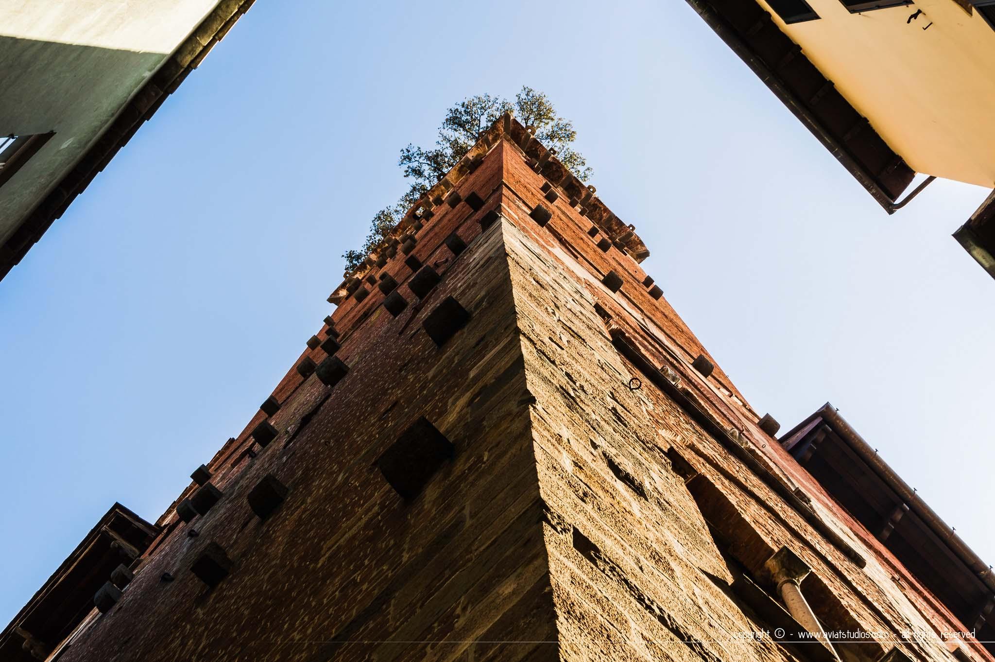 journée à Lucca - la Torre Guinigi en contre-plongée