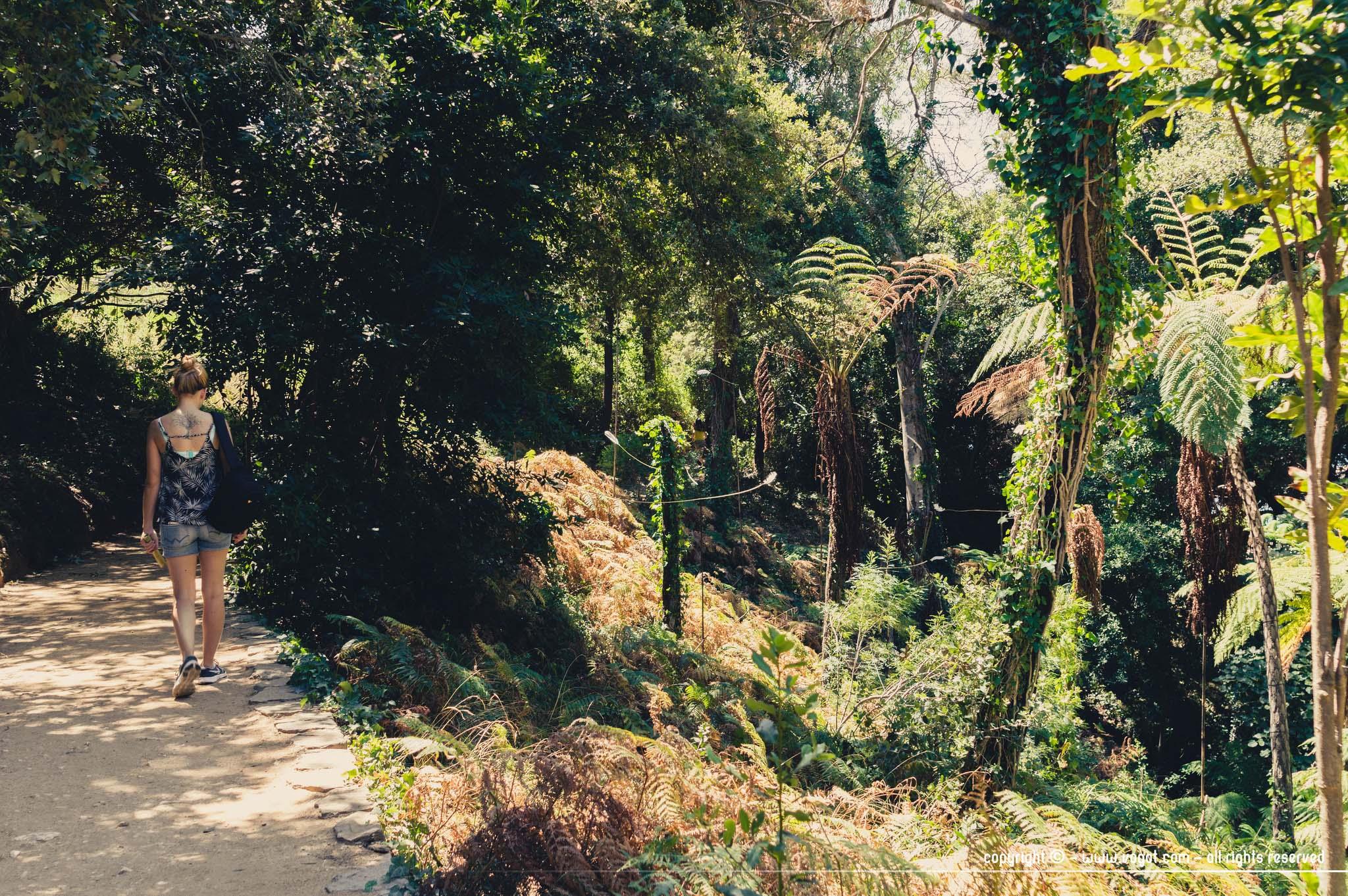 Dans le jardin de Nouvelle-Zélande