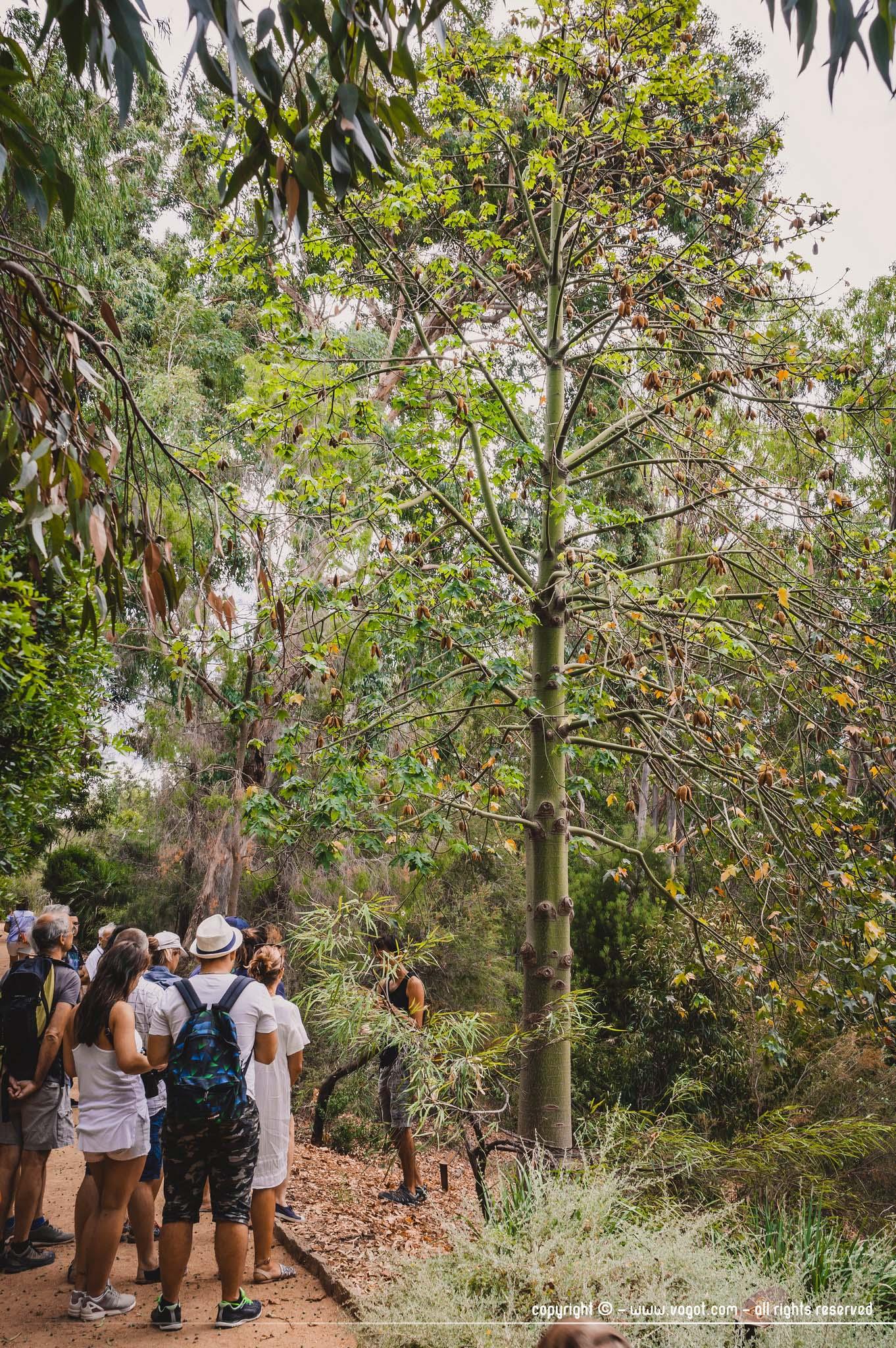 Dans le jardin d'Australie