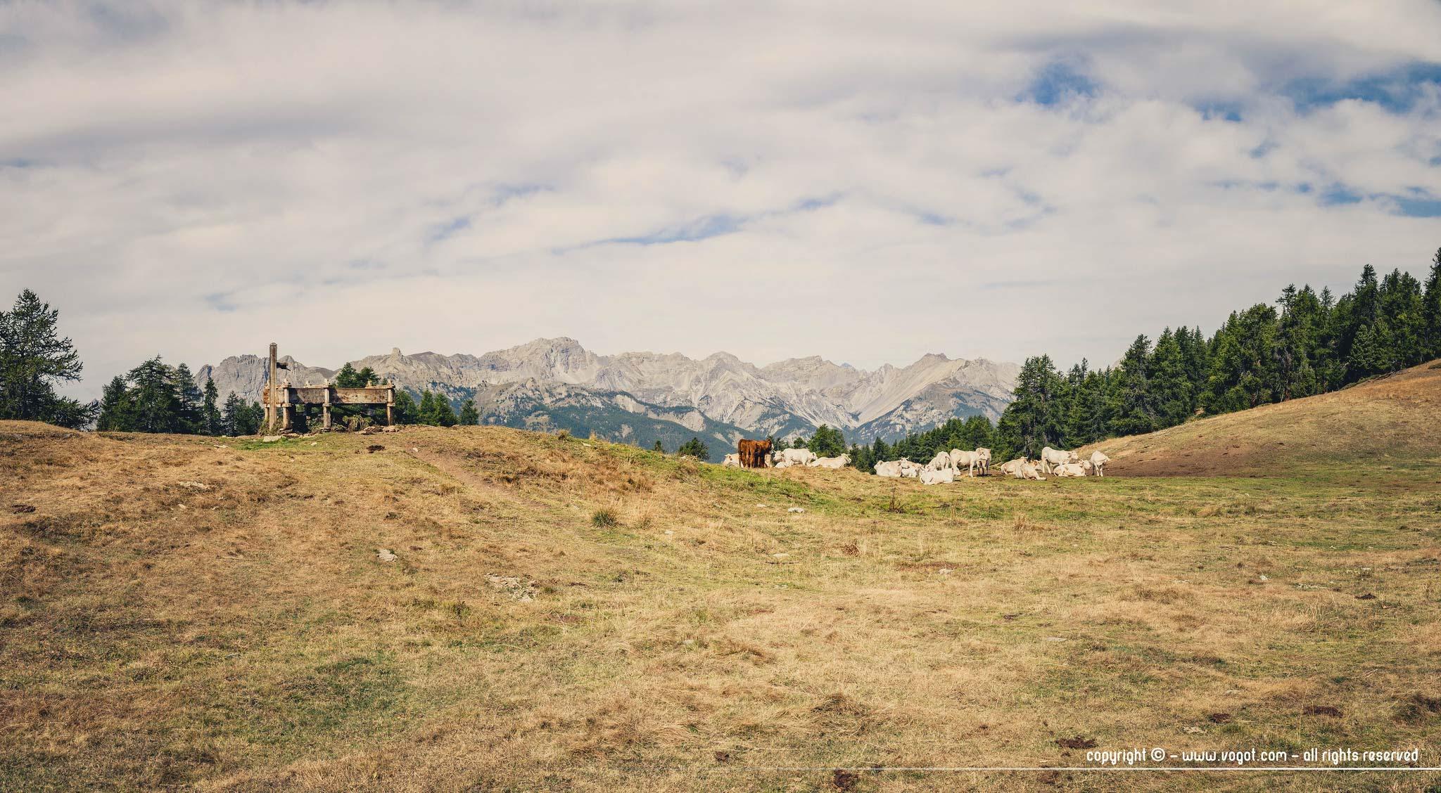 Trek dans le Queyras - pâturages au Col des prés de Fromage