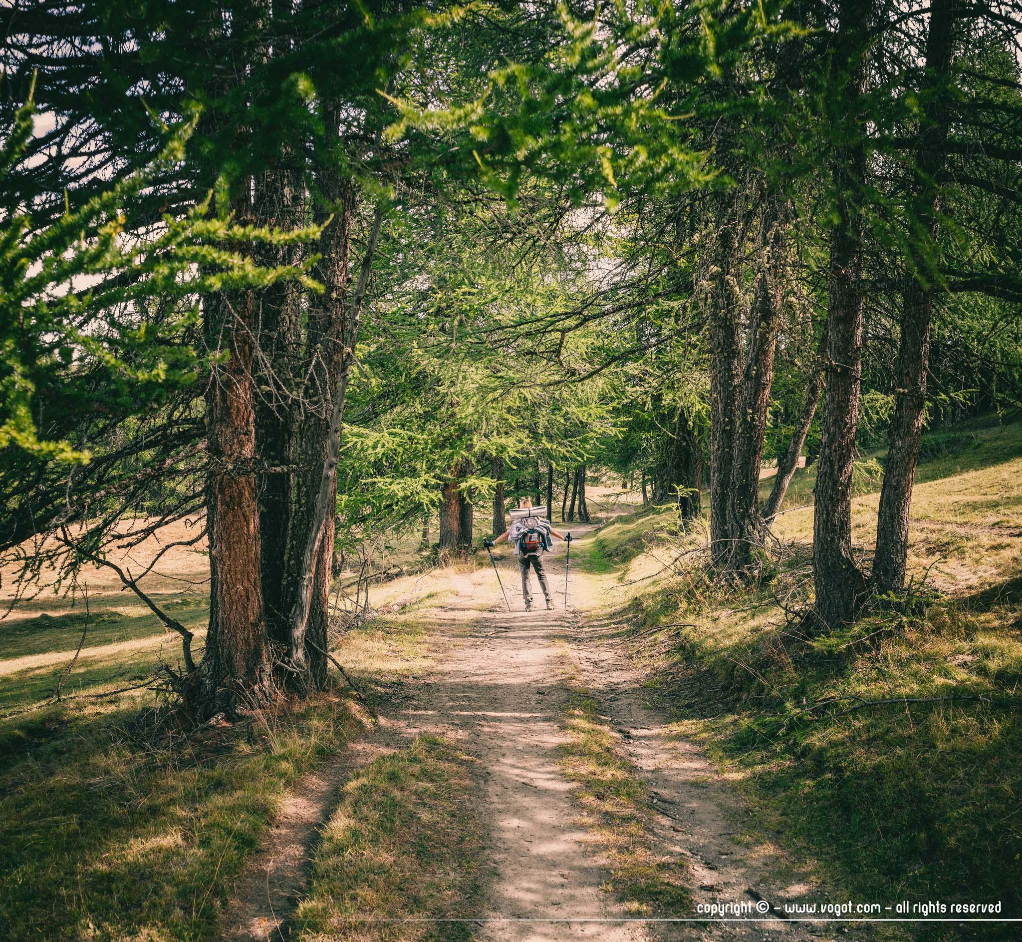 Bois des Bourrels