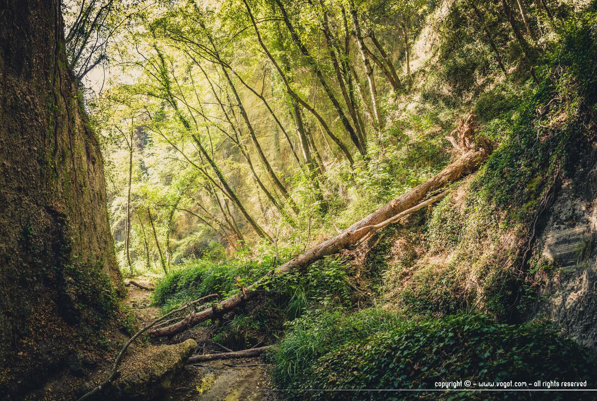 Vallon obscur du Donareo - un arbre couché barre le passage