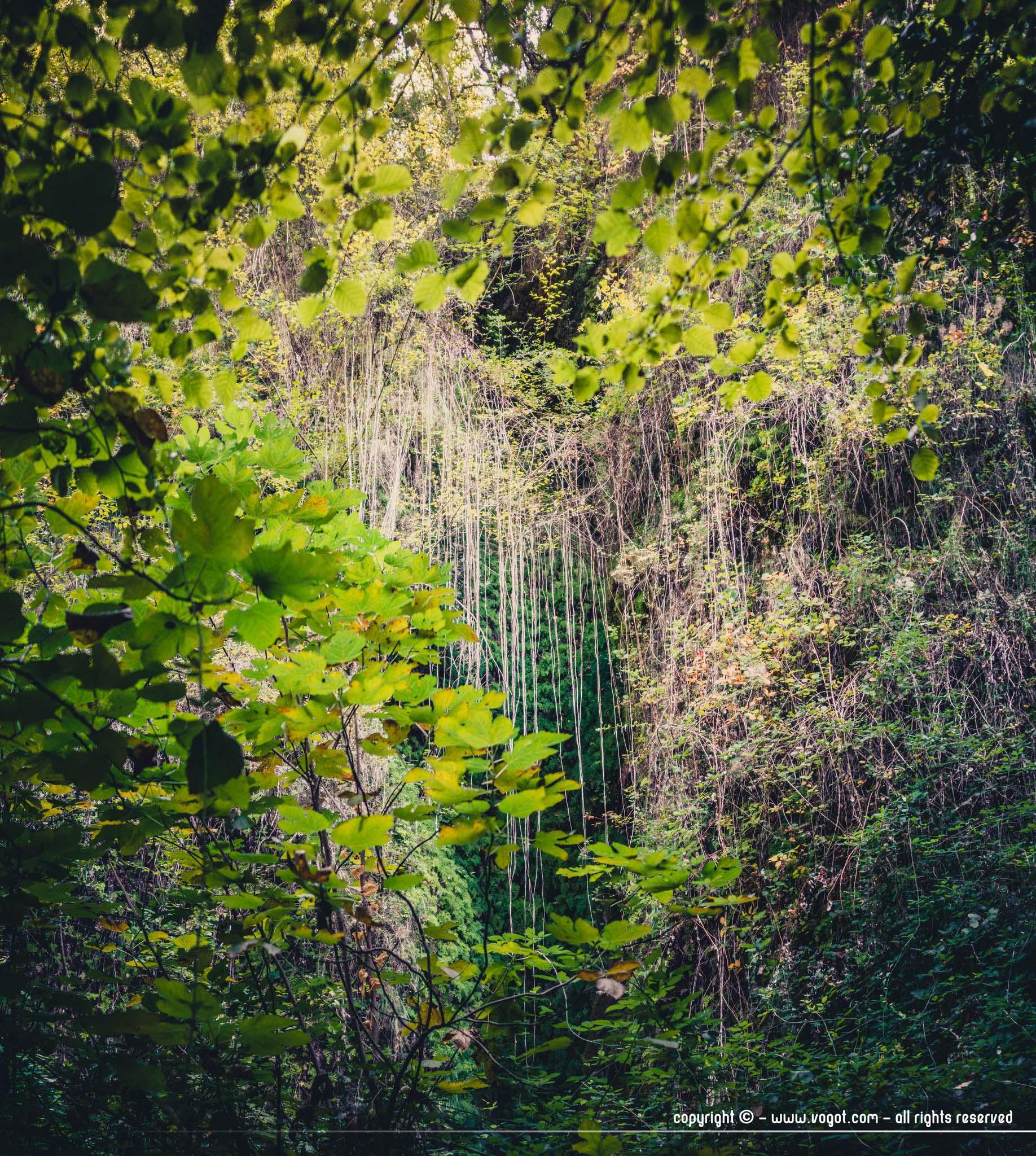 Vallon obscur du Donareo - végétation luxuriante
