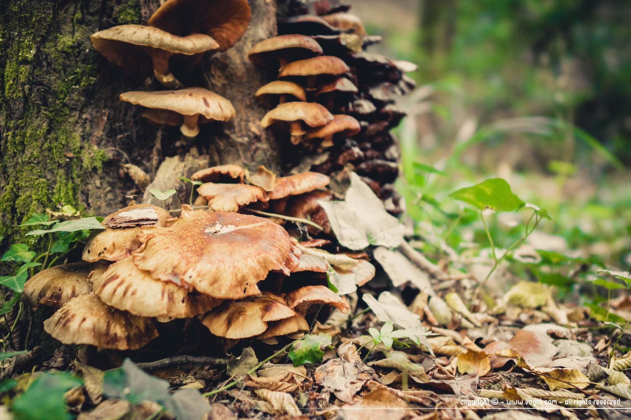 Vallon obscur du Donareo - champignons