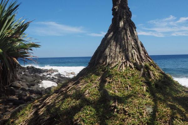 L'île de la Réunion - arbre en bord de mer