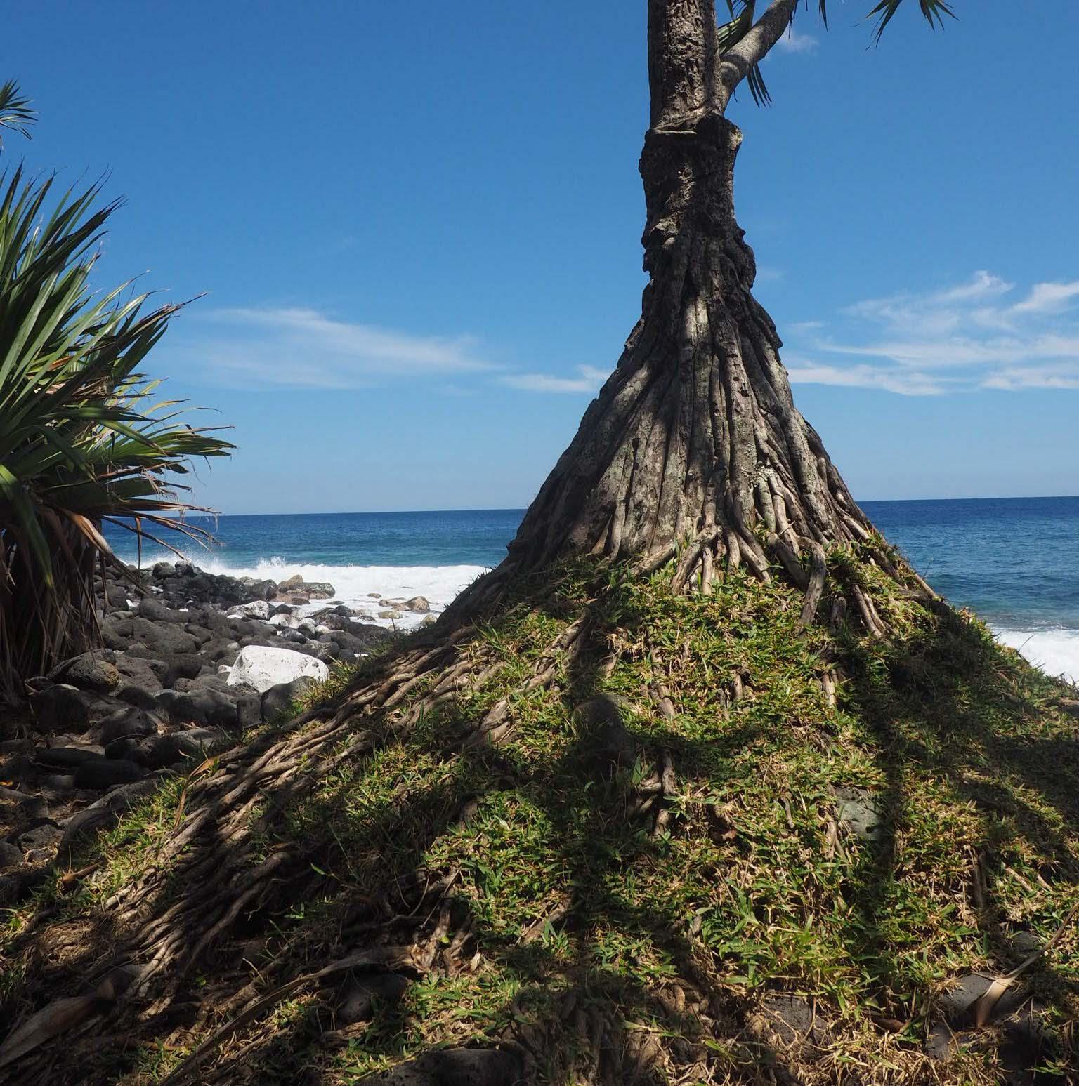 Premier séjour sur l'île de La Réunion