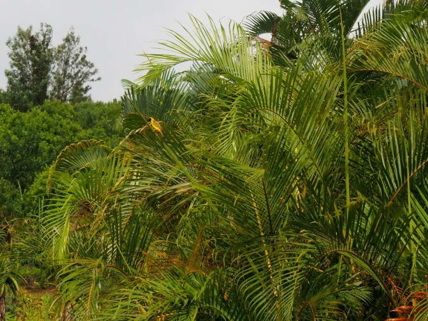 La faune de l'île de La Réunion